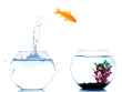 stock-photo-13836198-goldfish-jumping-off-to-new-fishtank